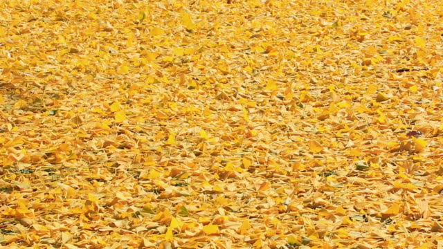 ms shot of autumn fallen leaves which blow away by strong winds / new york, united states - autumn leaf color stock videos and b-roll footage