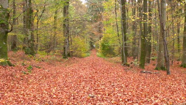 WS Shot of autumnal woodland / Freudenburg, Rhineland Palatinate, Germany