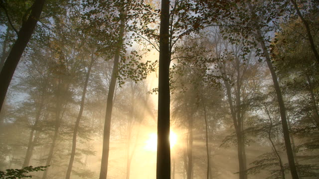 ws shot of autumnal woodland with fog and sun / freudenburg, rhineland palatinate, germany - ノルトラインヴェストファーレン州点の映像素材/bロール