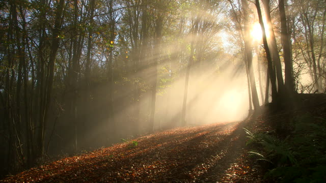 vídeos de stock, filmes e b-roll de ws shot of autumnal woodland with fog and sun / freudenburg, rhineland palatinate, germany - outono
