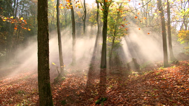 MS Shot of autumnal woodland with fog and sun / Freudenburg, Rhineland Palatinate, Germany