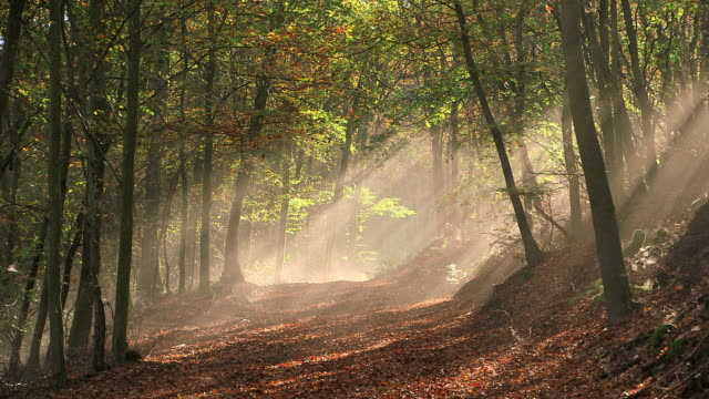 WS Shot of autumnal woodland with fog and sun / Freudenburg, Rhineland Palatinate, Germany