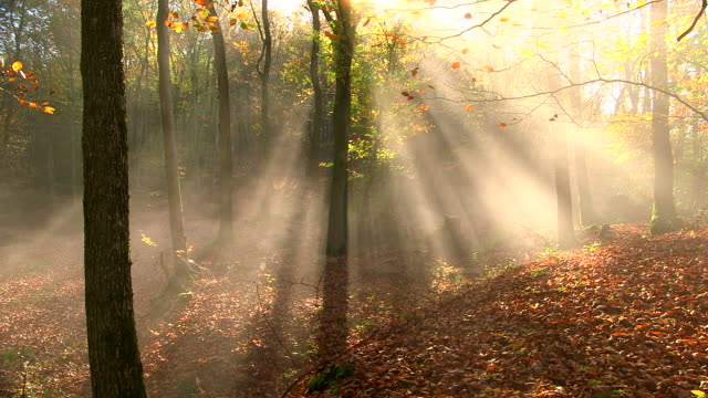 stockvideo's en b-roll-footage met ms shot of autumnal woodland with fog and sun / freudenburg, rhineland palatinate, germany - herfst