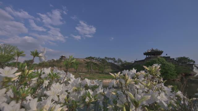 ms t/l shot of azalea flower around suwon hwaseong castles banghwasuryujeong building (unesco heritage) / suwon, gyeonggi-do, south korea - suwon stock videos and b-roll footage