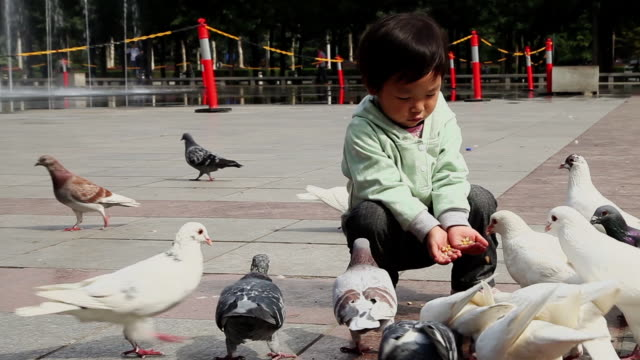 MS Shot of baby girl feeding seeds to dove in public square / Xian, China