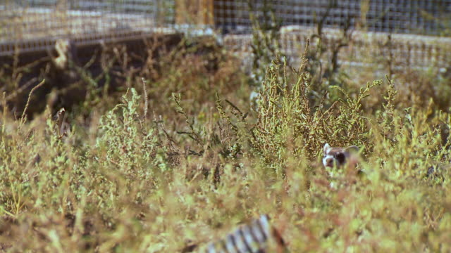ms r/f shot of baby prairie dog in background at us fish and wildlife national black footed ferret conservation center / fort collins, colorado, united states - wildlife conservation stock videos & royalty-free footage