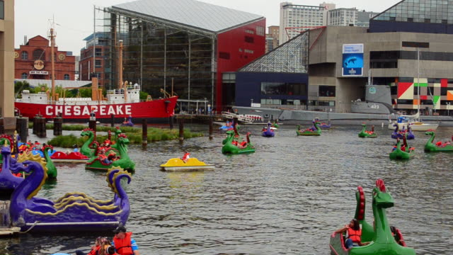 ms shot of baltimore maryland inner harbor with families out of dragon boats peddling for fun on chesapeake bay / baltimore, maryland, united states - hafen von baltimore stock-videos und b-roll-filmmaterial