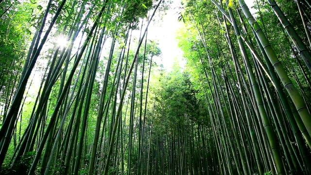 shot of bamboo forest at juknokwon (bamboo garden) - 潅木点の映像素材/bロール