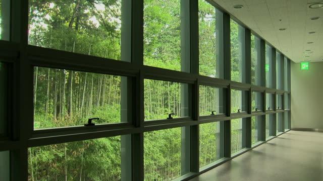 vídeos de stock e filmes b-roll de shot of bamboo forest over window - bambu material