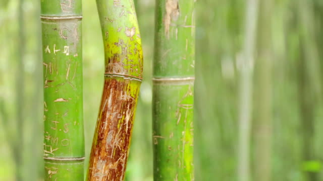 shot of bamboo - damyang stock videos & royalty-free footage