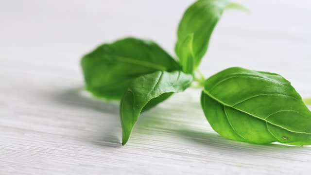 cu pan shot of basil leaves / london, united kingdom  - basil stock videos & royalty-free footage