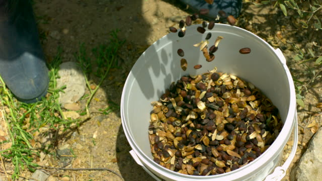 cu slo mo shot of beans and husks falling into plastic bucket with mans boots / elgouna, red sea, egypt - bucket stock videos & royalty-free footage