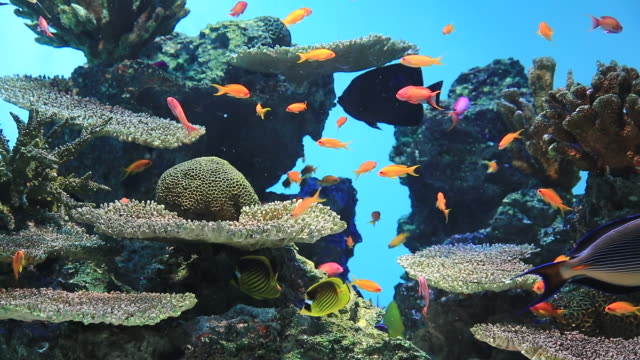 ms shot of beautiful fishes swimming around corals / kasai, tokyo, japan - 水族館点の映像素材/bロール