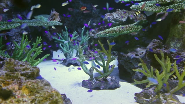 cu shot of beautiful spot with many purple fishes / sinagawa, tokyo, japan - 水族館点の映像素材/bロール
