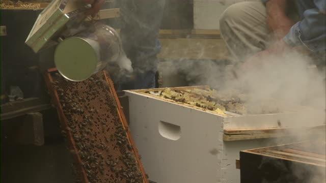 vídeos de stock, filmes e b-roll de shot of bee farmer spraying repellant as another bee farmer inspects the honeycomb. - grupo mediano de animales