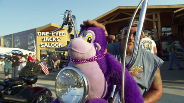 ms tu shot of biker showing off purple stuffed monkey sitting on handlebars of his motorcycle during sturgis motorcycle rally / sturgis, south dakota, united states - motociclista video stock e b–roll