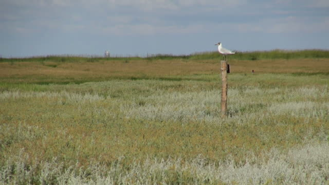 ws shot of bird seating on wooden pole in salt meadows, north sea north frisia / westerhever / westerhever, schleswig holstein, germany - pole stock videos & royalty-free footage