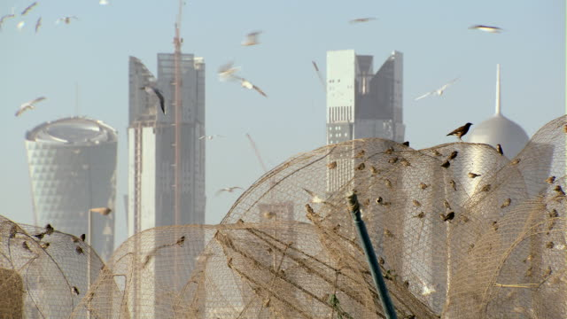 vídeos de stock, filmes e b-roll de ms shot of birds flying and congregating around metal mesh in port area with city skyline / doha, qatar - arame