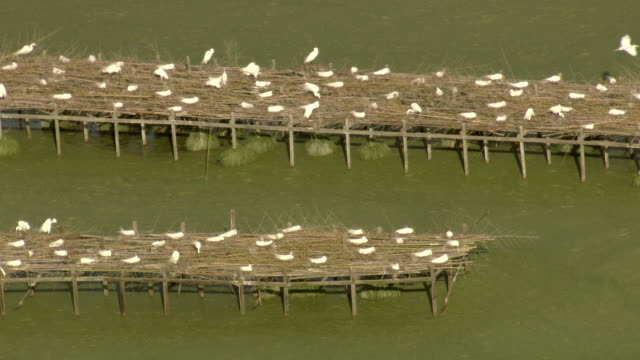 cu aerial shot of birds on docks by water at bird city bird sanctuary in iberia parish / louisiana, united states - water bird stock videos & royalty-free footage