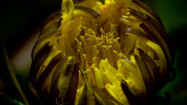 Shot of Blooming Flower