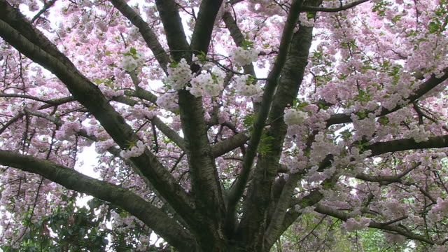 cu shot of blooming trees at champs elysees / paris, ile de france, france - ile de france stock videos and b-roll footage