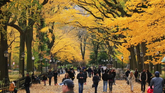 ws tu shot of blowing autumnal fallen leaves and people walking down mall surrounded by autumn color trees / new york, united states - central park manhattan stock videos and b-roll footage