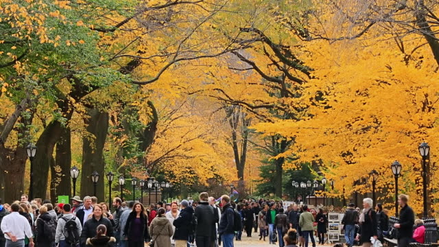 ms shot of blowing autumnal fallen leaves and people walking down mall surrounded by autumn color trees / new york, united states - people standing in a row stock videos & royalty-free footage