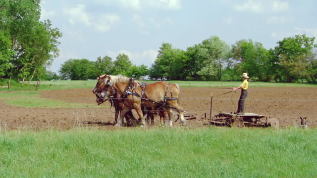 stockvideo's en b-roll-footage met ms pan ts shot of blue pick up truck driving on road to young amish boy working with horse drawn plough / kingston, wisconsin, united states - amish