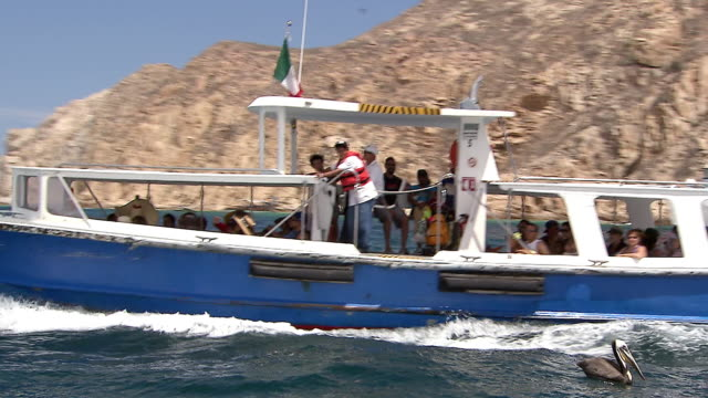ms pov shot of boat filled with tourists passing pelican floating on water with rocky coast and white beach side buildings / cabo san lucas, baja california sur, mexico - cabo san lucas stock videos & royalty-free footage