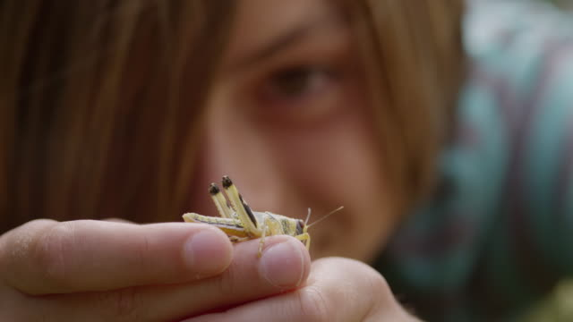cu r/f shot of boy taking close look at insect / london, hampstead, united kingdom - 男の子点の映像素材/bロール