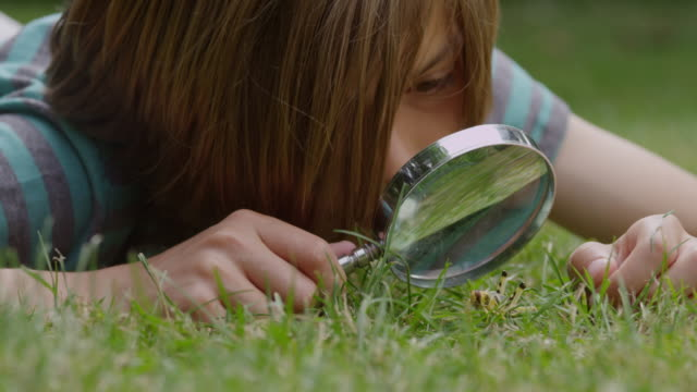ecu shot of boy with magnifying glass, learning about insects / london, hampstead, united kingdom - magnifying glass stock videos & royalty-free footage