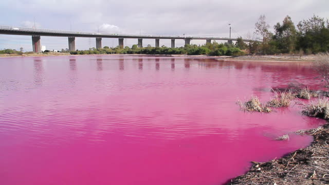 ms pan shot of bright red algal bloom near westgate bridge, yarra rive / melbourne, victoria, australia - water pollution stock videos & royalty-free footage