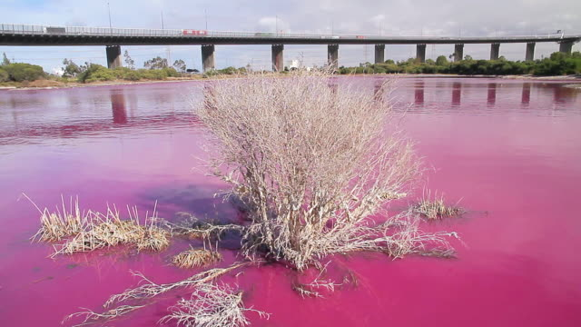 ms shot of bright red algal bloom near westgate bridge, yarra river / melbourne, victoria, australia - water pollution stock videos & royalty-free footage