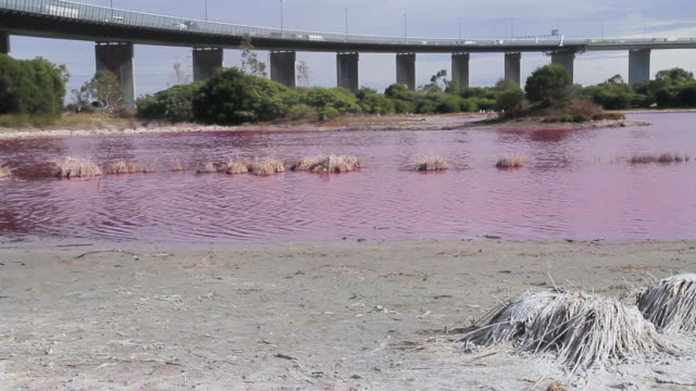 MS PAN Shot of bright red algal bloom near Westgate Bridge, Yarra River / Melbourne, Victoria, Australia