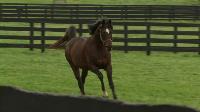 shot of brown horse galloping by camera over to the fence. - galoppieren stock-videos und b-roll-filmmaterial