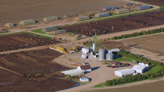 WS AERIAL TS ZO Shot of Buildings and silos and pull out to cattle feedlot / Nebraska, United States