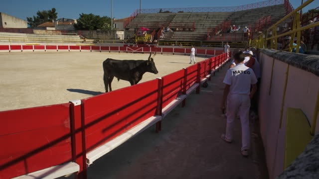 MS Shot of bull game in Arena / St. Remy de Provence, Provence, France