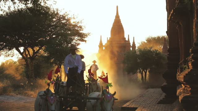 ws shot of bullock carts and pagodas at sunset kingdom of pagan at sunset / bagan, burma  - mittelgroße tiergruppe stock-videos und b-roll-filmmaterial