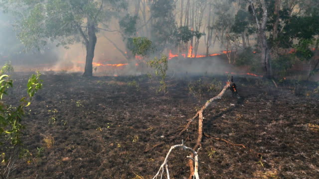 Shot of burned Papua forest with fire residue