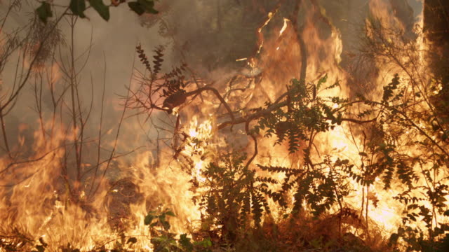 """ms slo mo shot of burning branches and leaves, forest fire and flames / nannup, western australia, australia"" - feuer stock-videos und b-roll-filmmaterial"