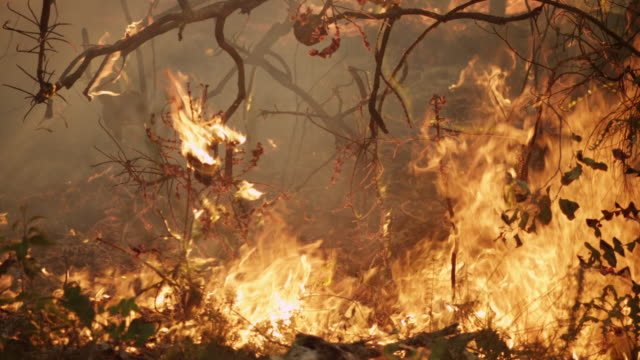 """""""ms pan slo mo shot of burning branches and leaves, forest fire, flames / nannup, western australia, australia"""" - forest fire stock videos & royalty-free footage"""