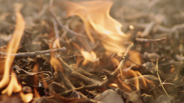 """cu la slo mo shot of burning branches and leaves on ground, flames, fire, smoke / nannup, western australia, australia"" - twig stock videos & royalty-free footage"