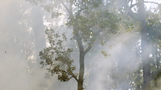 """""""ms slo mo shot of burning tree in forest fire, heat haze, rising smoke / nannup, western australia, australia"""" - smoke physical structure stock videos & royalty-free footage"""