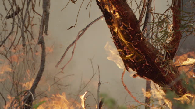 """cu slo mo shot of burning trees in forest fire, flames, heat haze, rising smoke / nannup, western, australia "" - heatwave stock videos & royalty-free footage"