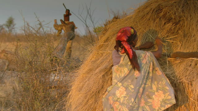 ms shot of bush woman grabbing straw and placing it on roof of hut / limpopo, south africa - grass hut stock videos & royalty-free footage