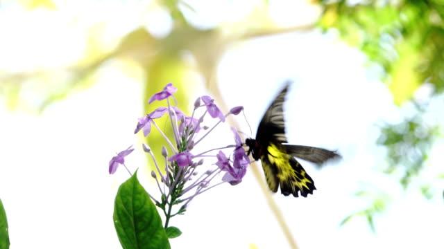 Shot of butterfly flying on purple flower