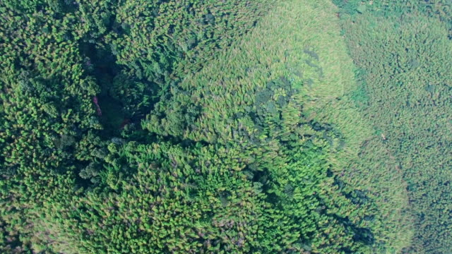 ws aerial shot of cable car on bamboo forest,yinbin,sichuan,china. - 四川省点の映像素材/bロール