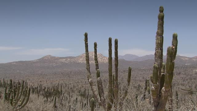MS Shot of Cactus with landscape / Cabo San Lucas, Baja California Sur, Mexico