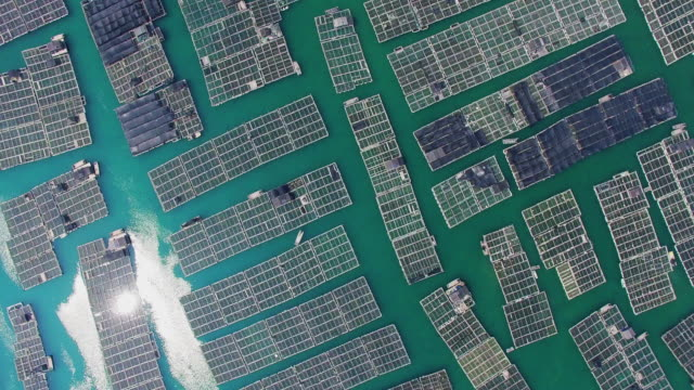 vidéos et rushes de ws aerial shot of cage culture area in sea/fujian,china - 30 secondes et plus
