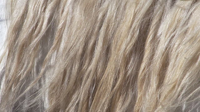 stockvideo's en b-roll-footage met cu shot of camargue horse mane waving in wind / saintes marie de la mer, camargue, france - animal hair